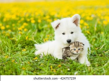 Cute puppy hugging a kitten on a dandelion field
