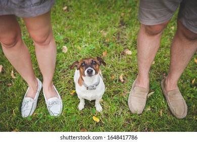 Un mignon chiot Jack Russell Terrier est assis entre les propriétaires et lève les yeux. Vue de dessus du chien obéissant et des pieds des propriétaires. Marchez dans le parc avec un chien.