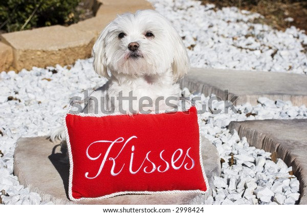 Cute puppy with a kisses sign
