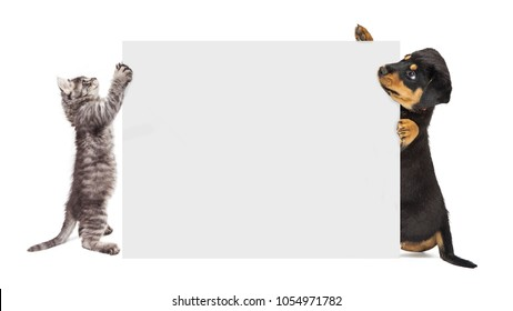 Cute puppy and kitten holding up a blank sign to enter text onto