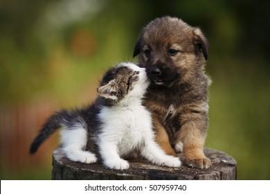 cute puppy images stock photos vectors shutterstock