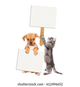 Cute puppy and kitten together holding blank signs to enter text. Isolated on white.