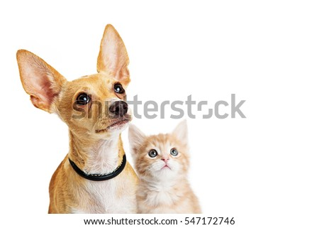 cute puppy kitten together looking into stock photo edit now