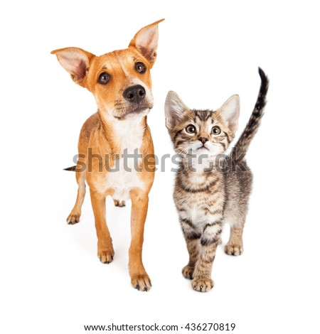 cute puppy kitten together walking forward stock photo edit now