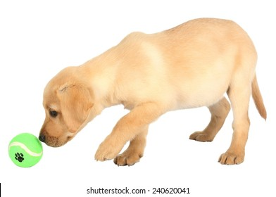 Cute puppy learning to play with it's green ball