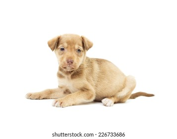 cute puppy lies on a white background isolated