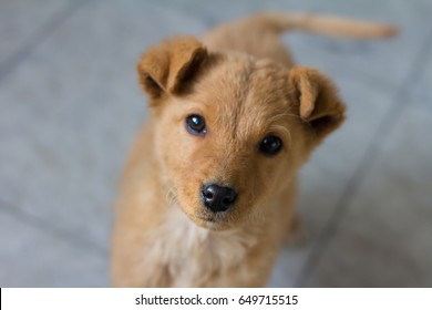 Cute puppy looking at the camera , closeup, selective focus