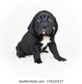 A cute puppy looking up on a white background.