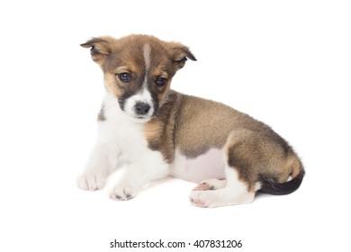 cute puppy looks