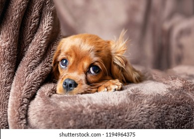Cute puppy lying on the warm blanket