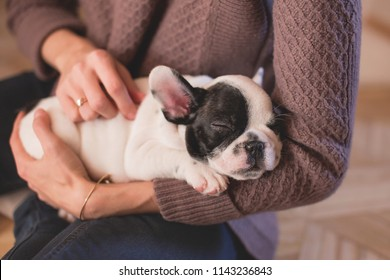 Cute Puppy Lying in Young Woman Hands