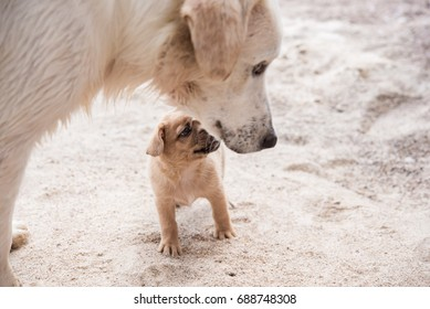 cute puppy and mom on the beach