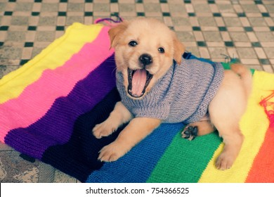 Cute puppy on colorful blanket, dog is friendly animal and loyal, young pup sit at house