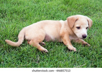Cute puppy on the lawn.