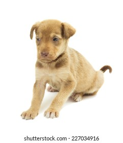cute puppy on a white background