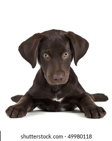 Cute puppy on white background facing camera