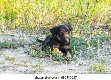 cute  puppy outdoors on a sunny day