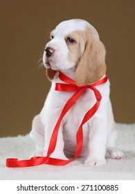 Cute puppy with red ribbon