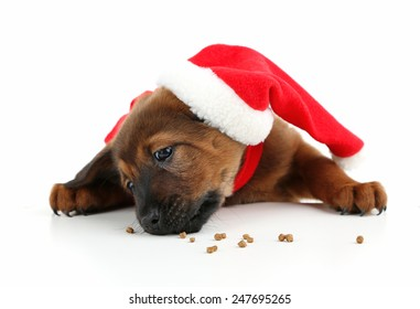 Cute puppy with Santa hat isolated on white