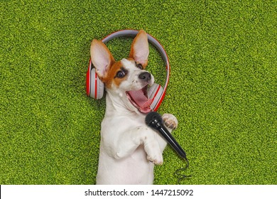 Cute puppy singing songs in microphone and listen to music on headphones.