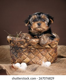 Cute puppy sitting in a basket with bird eggs