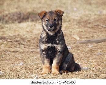 Cute puppy sitting on a lawn