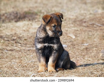 Cute puppy sitting on on a natural background