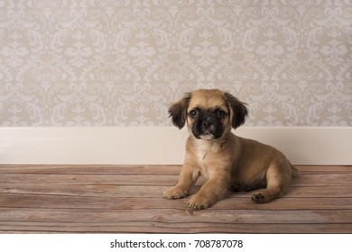 Cute puppy sitting with room for text