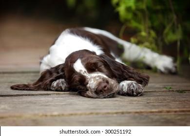 Cute puppy sleep
