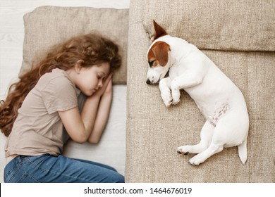 Cute puppy is sleeping on the bed, and the child is sleeping on the floor. Focus to dog. Education, discipline, training concept.