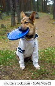 Cute puppy in a sweatshirt sits with a flying disc, a pet plays outdoors in the park, a sports dog