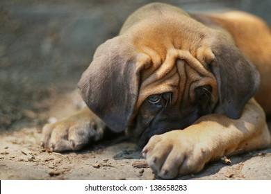Cute puppy in trouble, hiding
