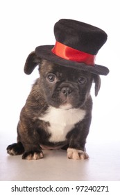 Cute puppy wearing a top hat isolated on white