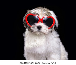 Cute puppy wearing valentines day glasses