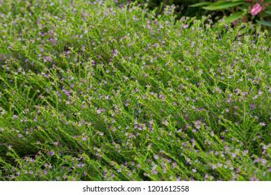 cute purple flower blossom.Lovely flower