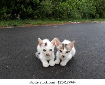 cute pussy walpaper