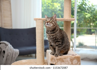 Cute pussycat on cat tree at home