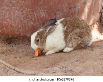 cute rabbit eat carrot on ground
