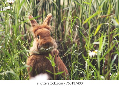 a cute rabbit eating a daisy at a local wildlife sanctuary park in a city