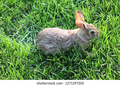 Cute rabbit in lawn
