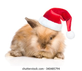 Cute rabbit in red santa hat. isolated on white background