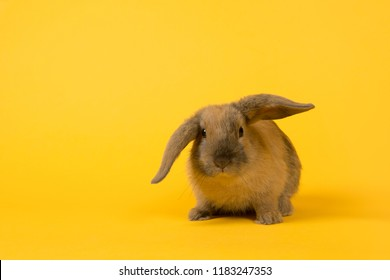 Cute rabbit seen from the front on a yellow background with copy space for easter