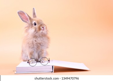 Cute rabbit sitting on a white book with glasses placed. Easter holiday