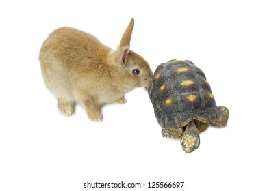 Cute rabbit and turtle isolated in a white background