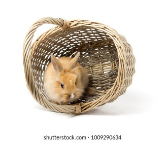 Cute rabbit in wicker basket isolated on white