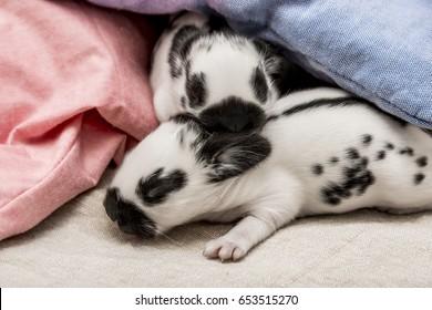 cute rabbits babies