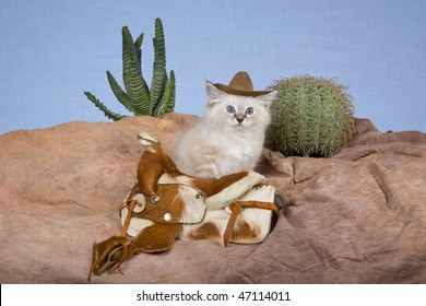 Cute Ragdoll kitten with cowboy hat and saddle, cactus on fake rocky mountain