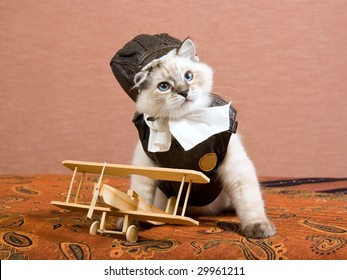 Cute Ragdoll kitten wearing pilot outfit with miniature wooden biplane on brown background