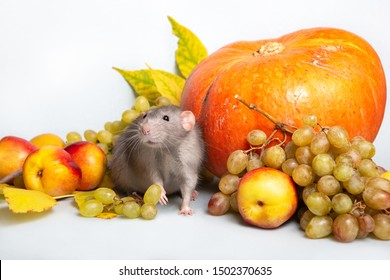 Cute rat dumbo with fruits and vegetables on a grey isolated background. Grapes, pumpkin, nectarines. Rat - a symbol of the Chinese New Year 2020
