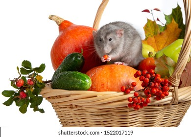 Cute rat dumbo with vegetables on a white isolated background. Branches of mountain ash; rose hips; pumpkin and other vegetables in a wicker basket. Rat is a symbol of Chinese New Year 2020